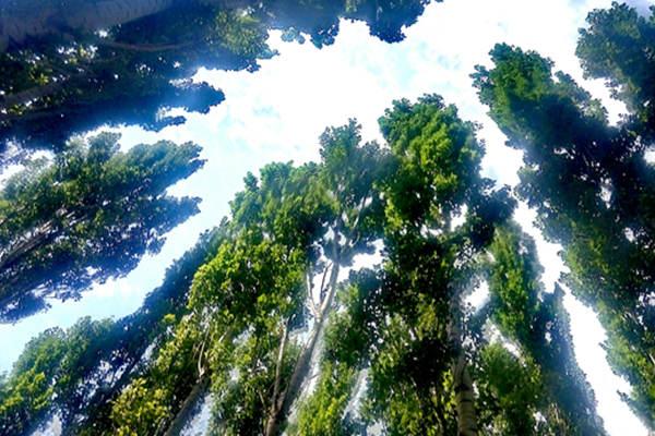 西域 树林蓝天.jpg