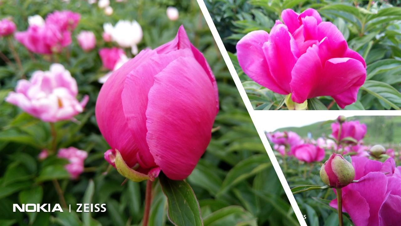 新疆伊犁·你好,这里是大山里的花