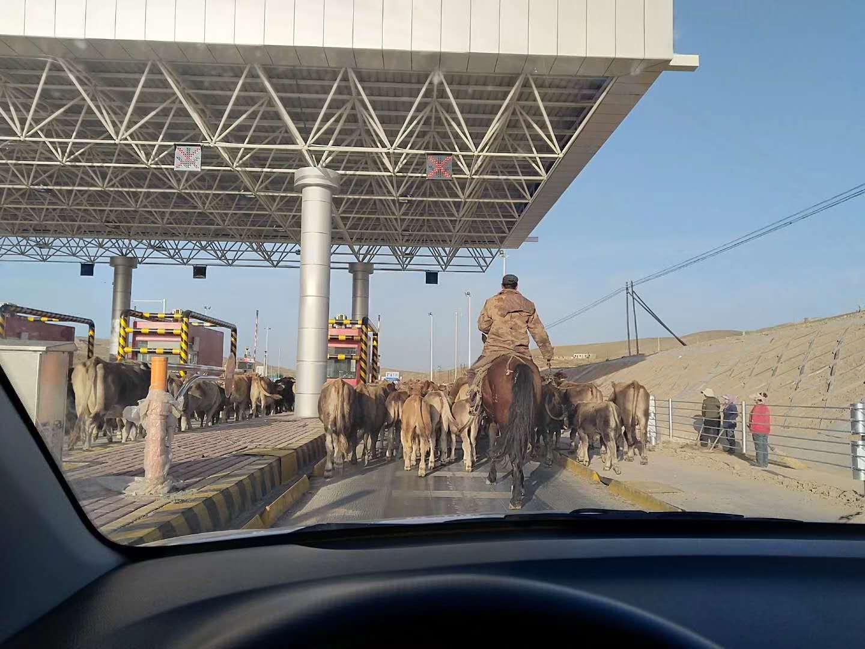 骑马过收费站
