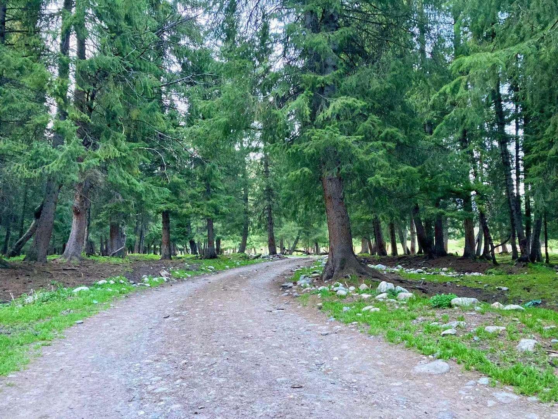 图:狗熊沟里的小路