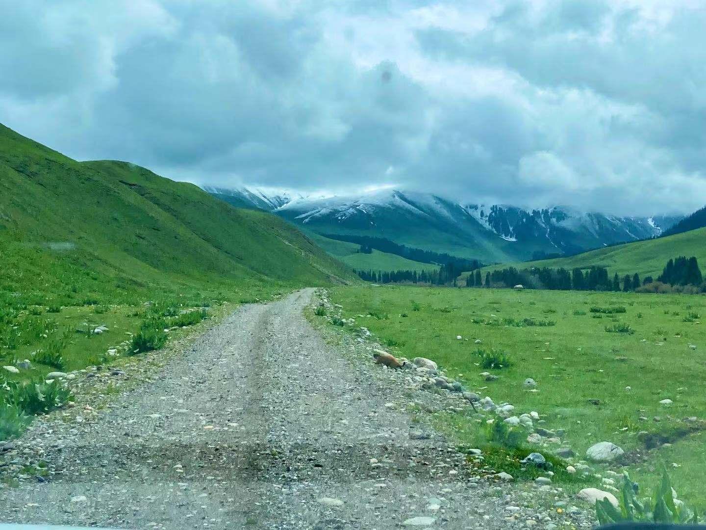 图:唐布拉山麓-山路