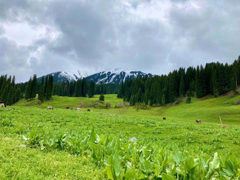 图:唐布拉山麓-草原